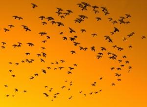 Birdsinsky
