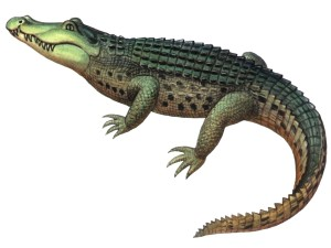 Hey Green Stupid, this is a CROCODILE. Do your research!