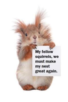 squirrelsign.jpg