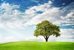 treecloudsgrasshill