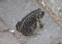 2020Toad