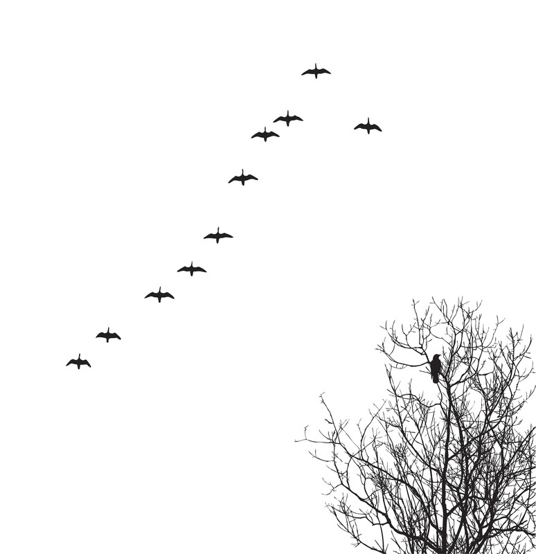 Flock of geese flying over bare tree.